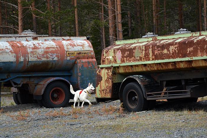 tankvagnar på sökhelg