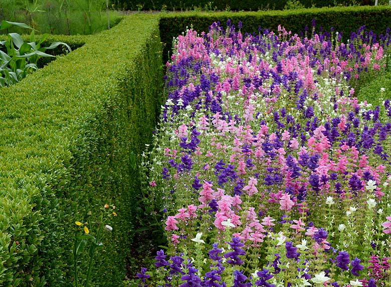 Heligan _ flower garden