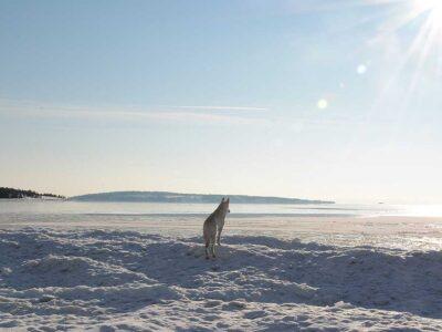 Ottelandet i vinterskrud