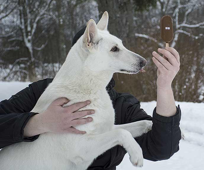 glasshund