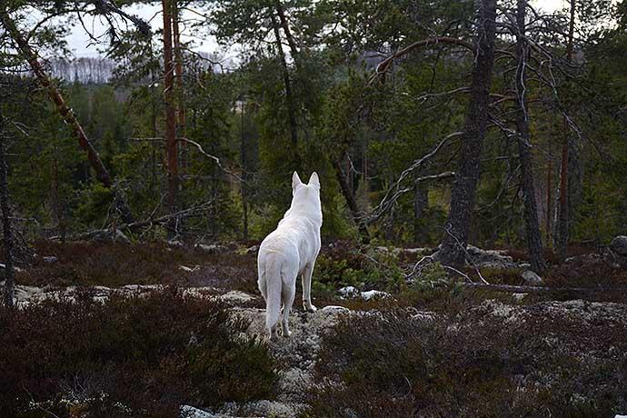 Sally i skogen