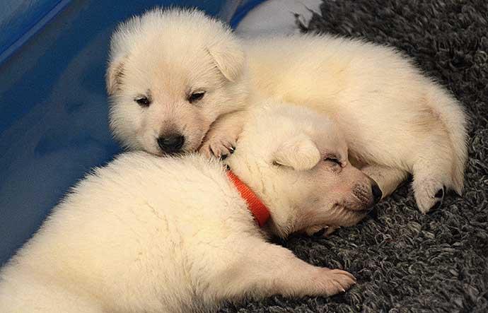 Orange sover