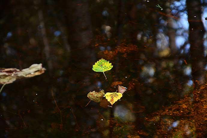 Hösten är här av Helen Thalen