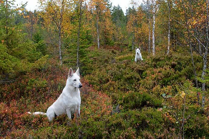 Sally och Nova i höstskogen