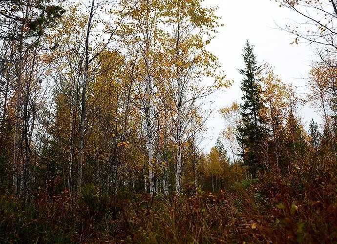Höstskog av Helen Thalen