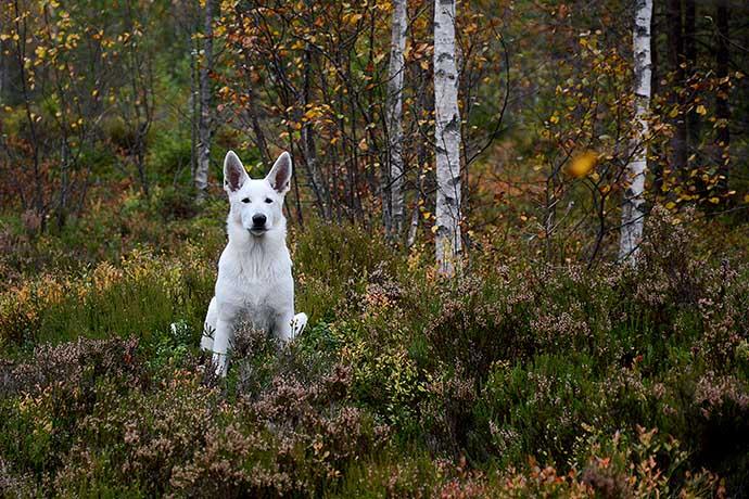 Nova i höstskog av Helen Thalen
