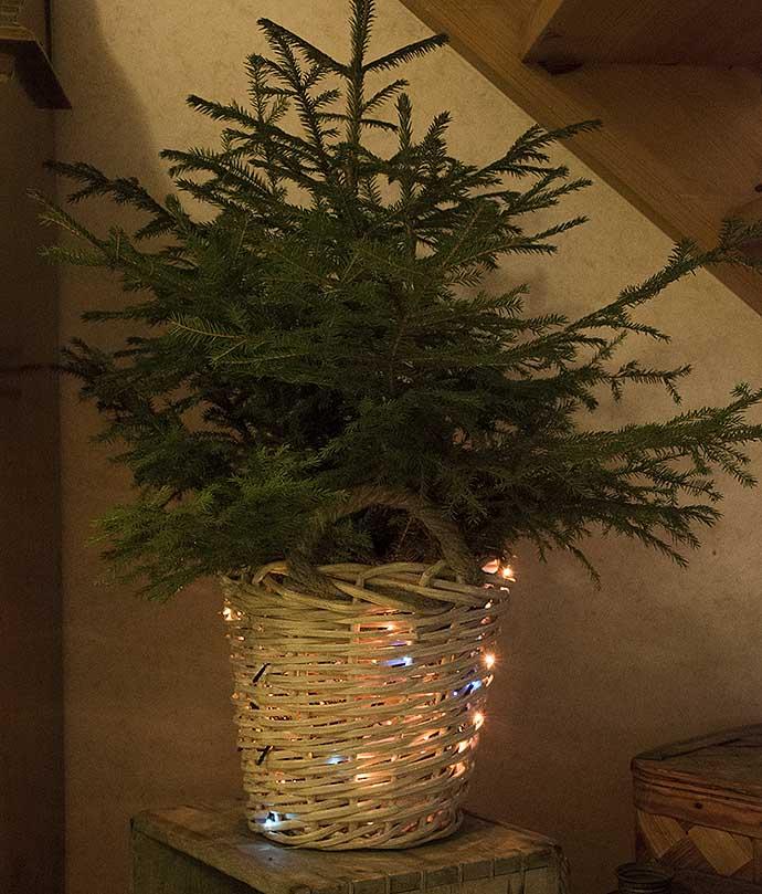 Annorlunda juldekor med ljusslinga i julgransfoten av Helen Thalen