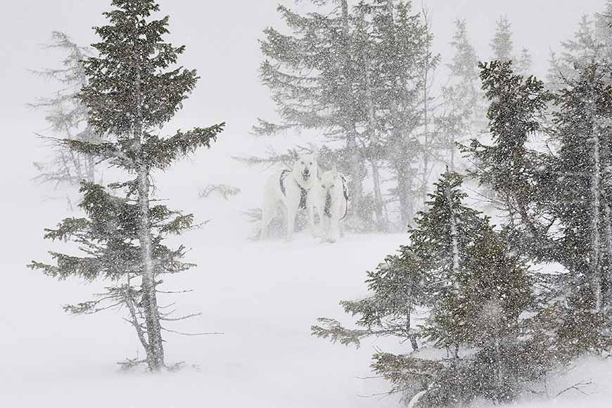 Snöstorm i Bydalen