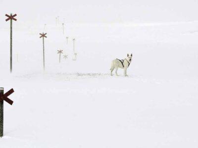Bydalen och snöstorm