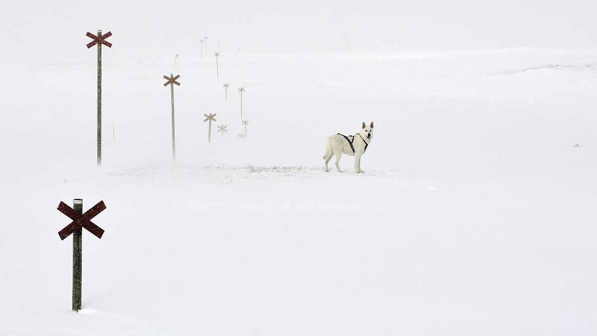Bydalen and blizzard