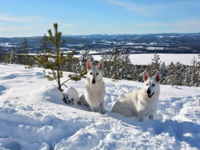 Sunshine and dog course