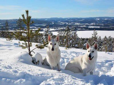Solsken och hundkurs