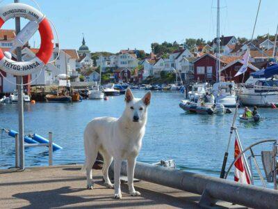 Grundsund i Bohuslän mitt i juli
