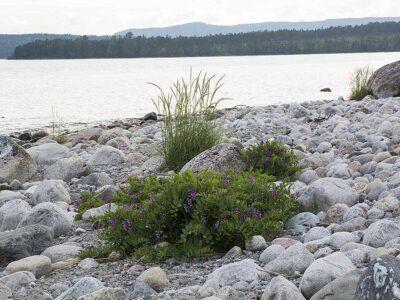En strand – många stenar