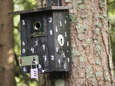 Här är det låst – fågelholk för kluriga