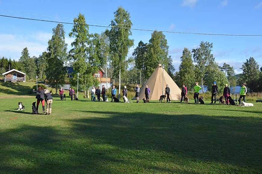 Hundhelg med Hundägarcoachen på Ulvön av Helen Thalen