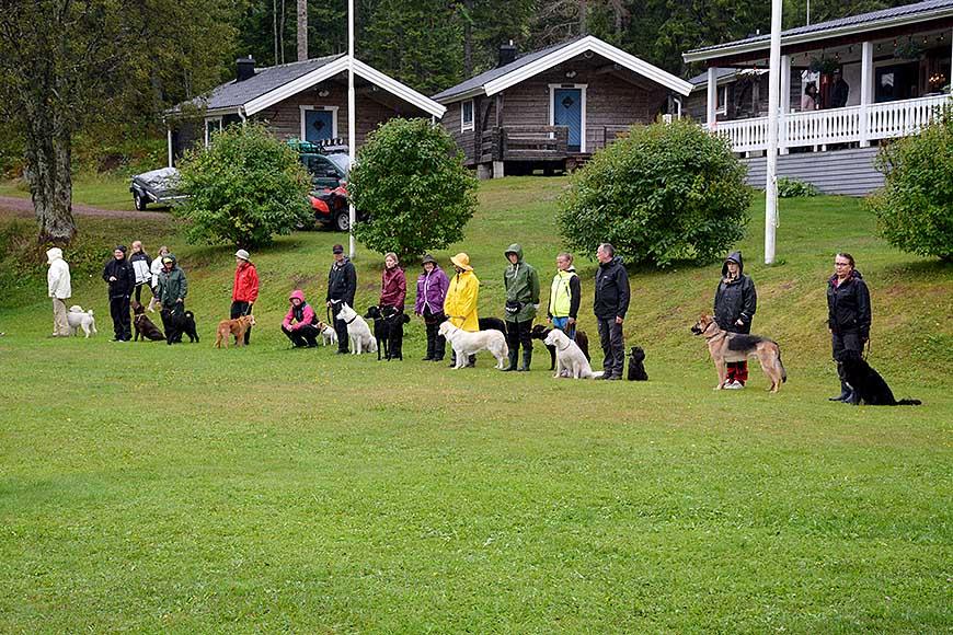 Hundträning i regn på Ulvön