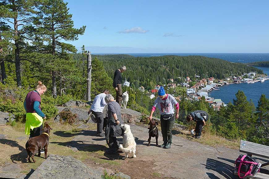 Hundträning på Lotsberget av Helen Thalen