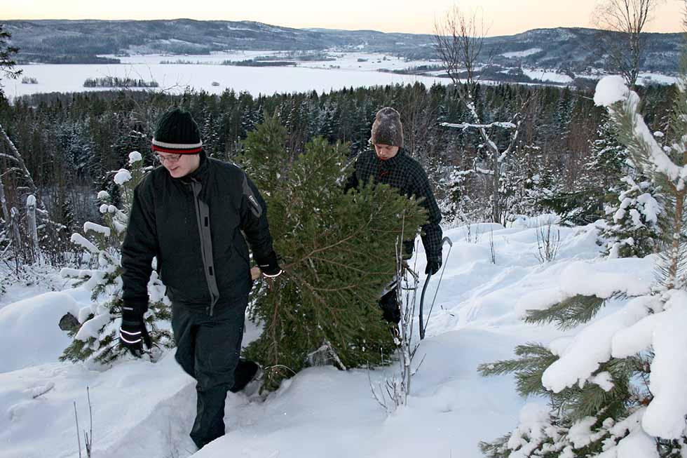 Julgranshämtning 2010 av Helen Thalen