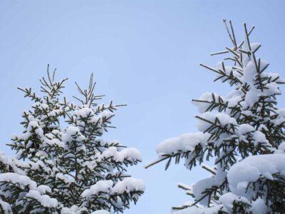 363: Över trädtopparna (14/365)