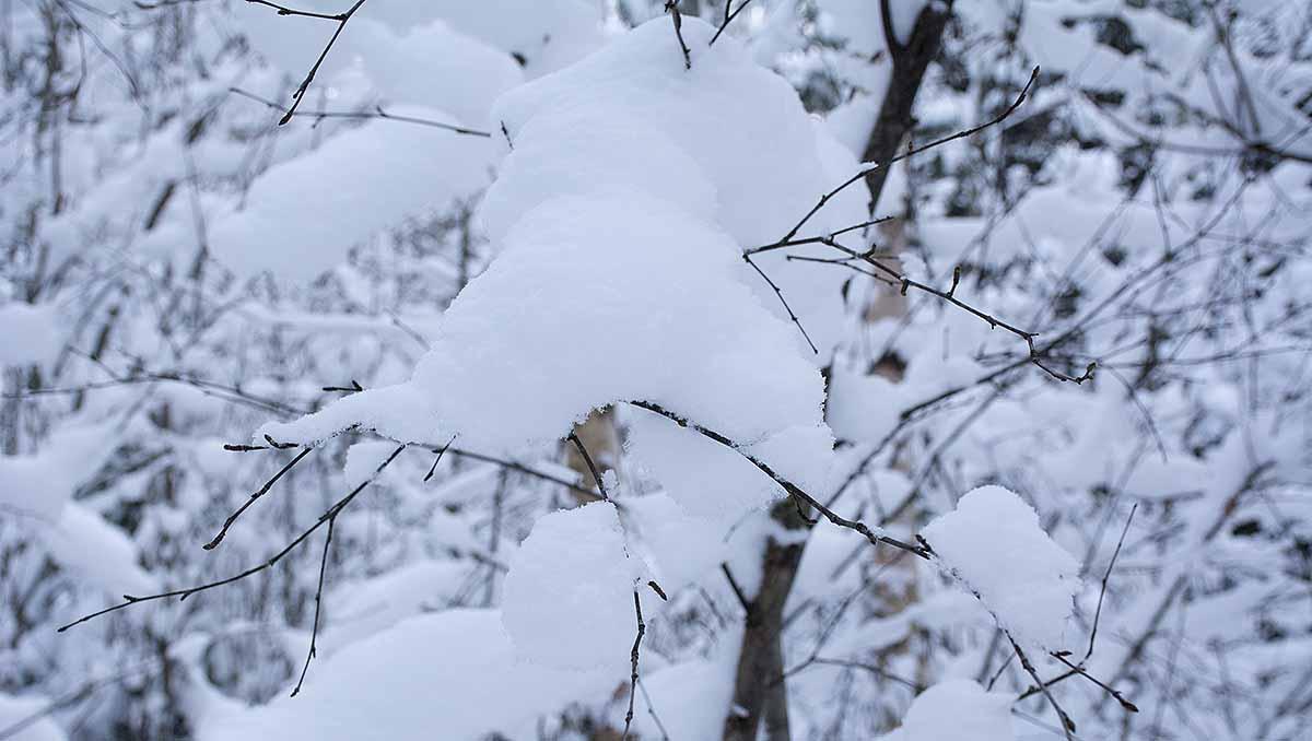 Under all snö