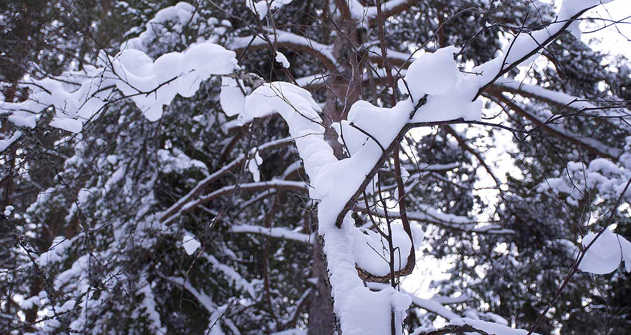 Bära snö och snö som bär