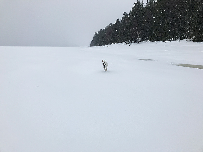 Nova i snöglopp vid Genesön