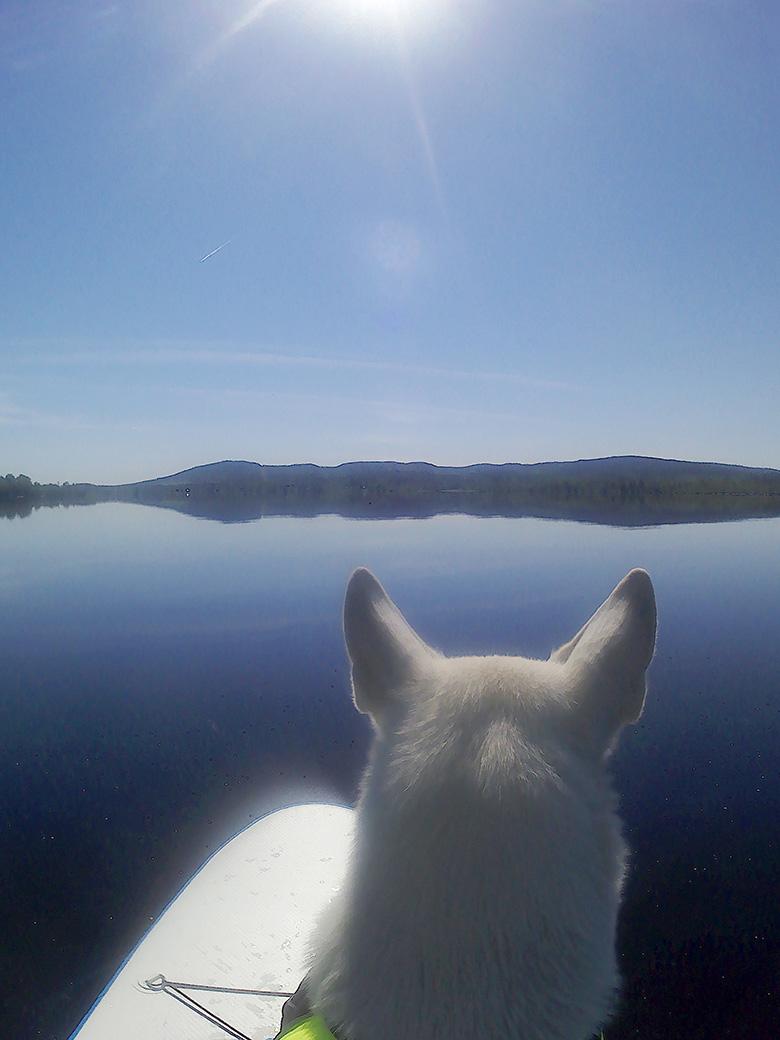 Ute och paddlar SUP med Nova, en Vit herdehund, av Helen Thalen