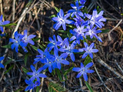 106: Himmelsblå (134/365)