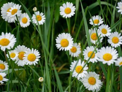 117: I full blom (158/365)