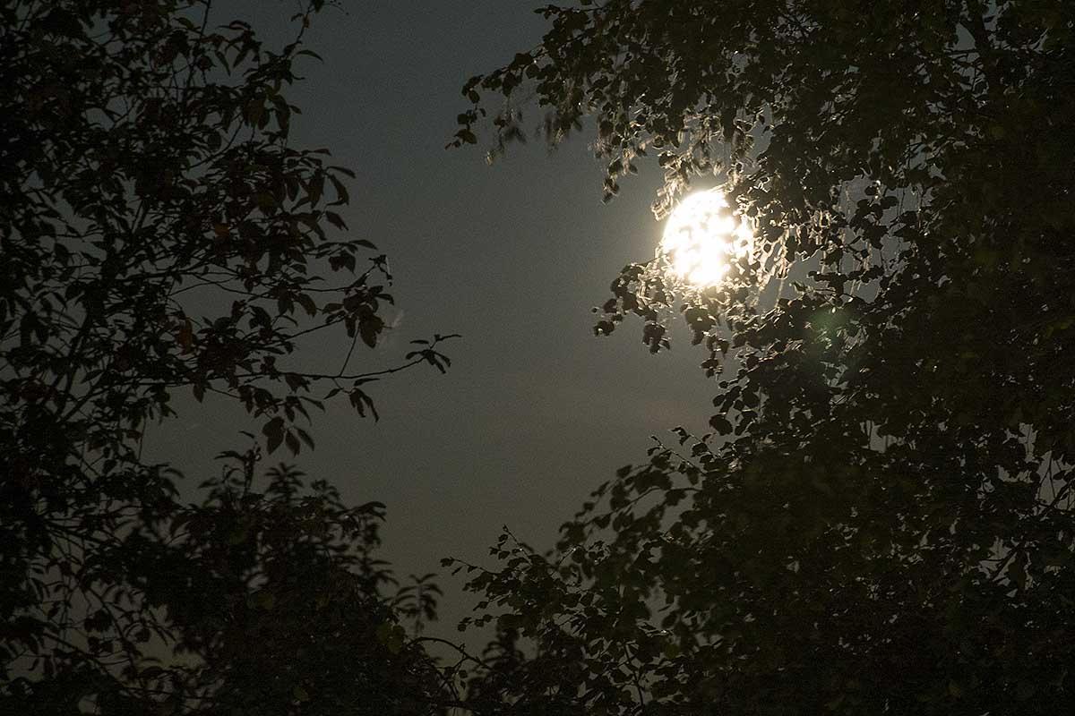 11: Augustimåne (237/365)