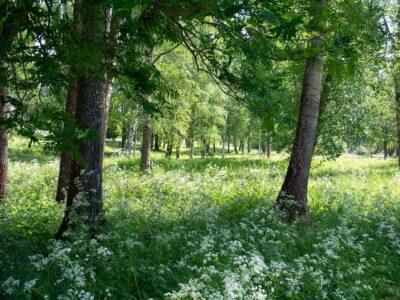 12. Bland träden (159/365)