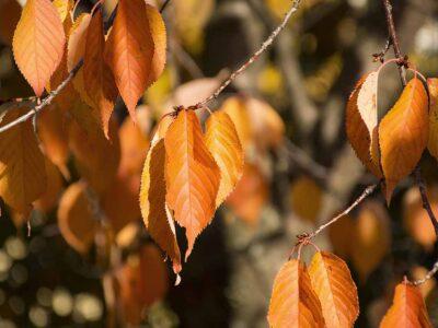 145: Hösten är här (242/365)