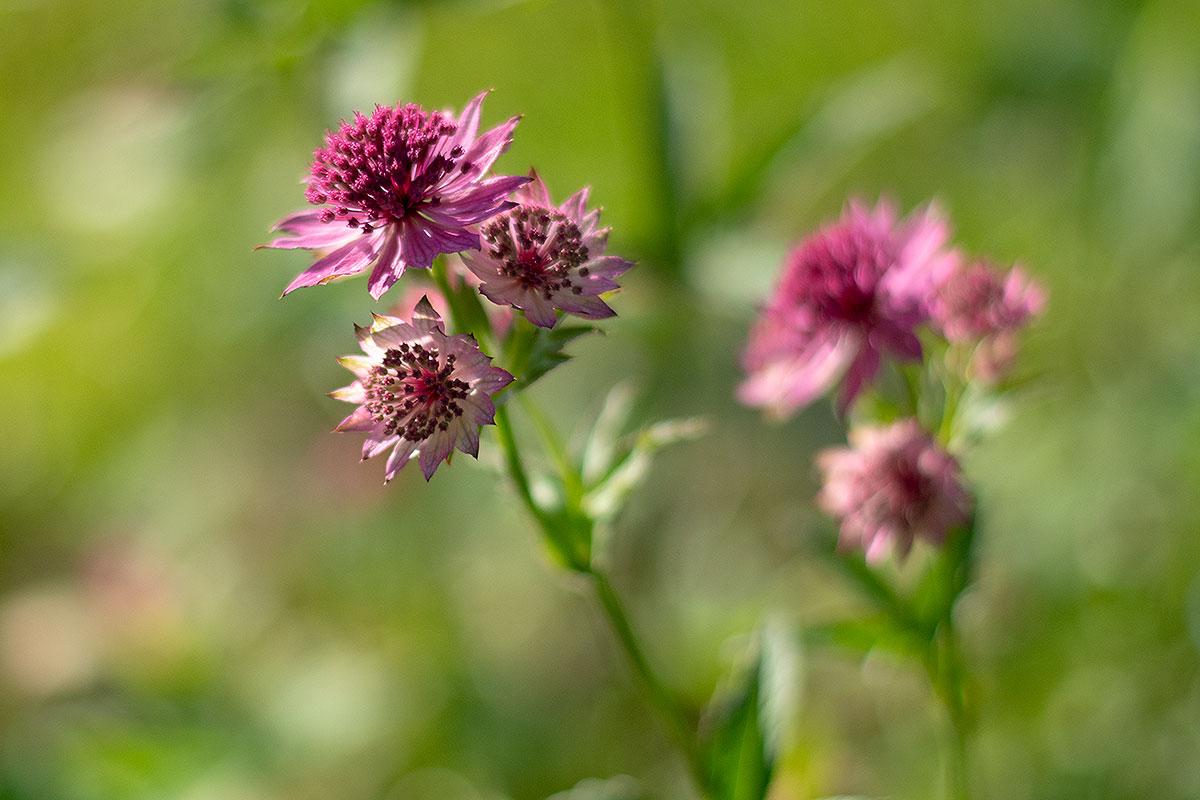 17: Blomställning (167/365)