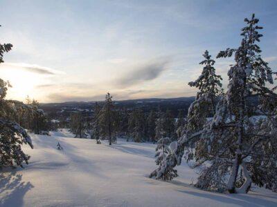 335: Vinterskrud (8/365)