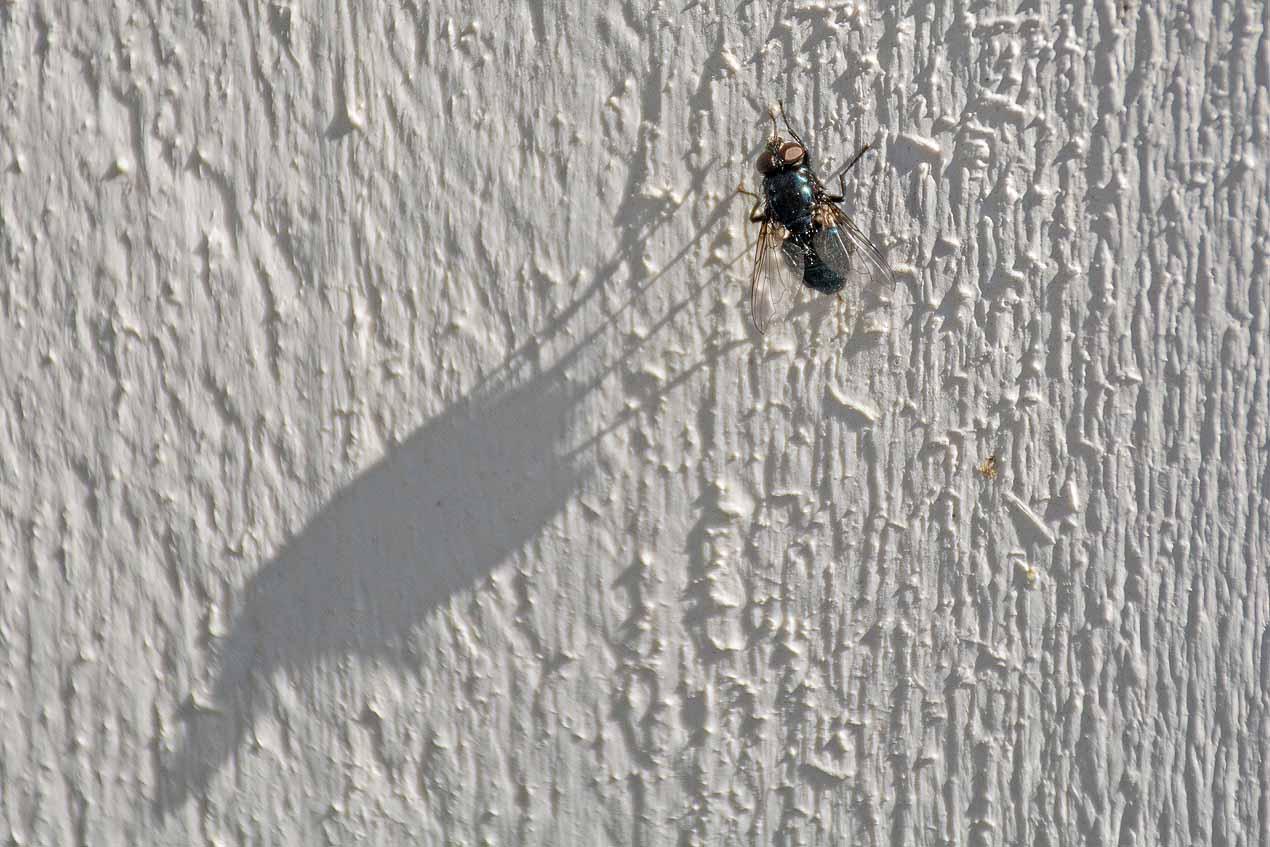 63: En fluga gör ingen sommar (175/365)