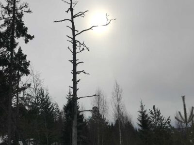 93: Grenkontakt (120/365)
