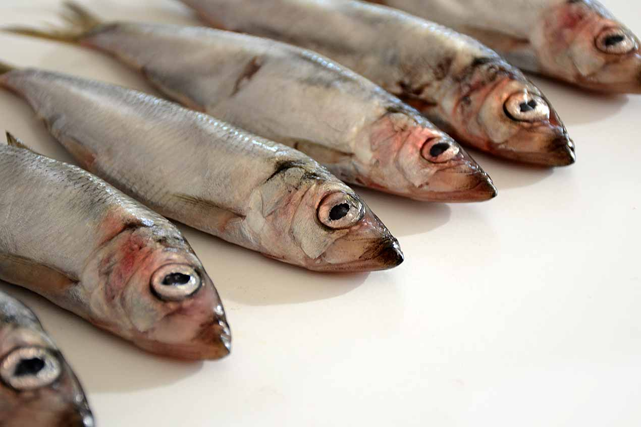 96: Ful fisk (267/365)