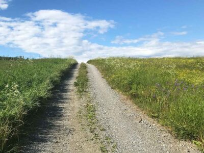 15: Blommande kullar (185/365)