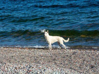 222: På strandkanten (214/365)