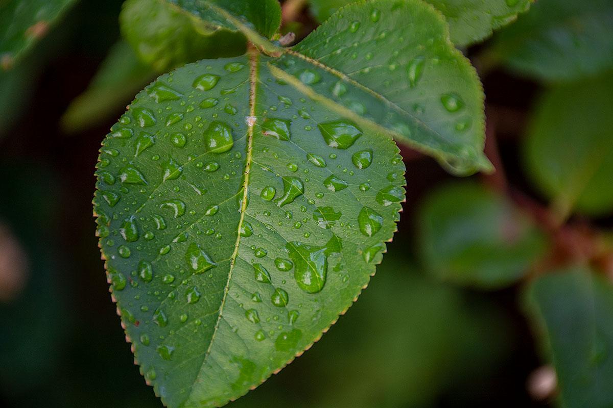 48: Efter regnet (225/365)