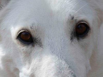 Vackra ögon och ögonkontakt