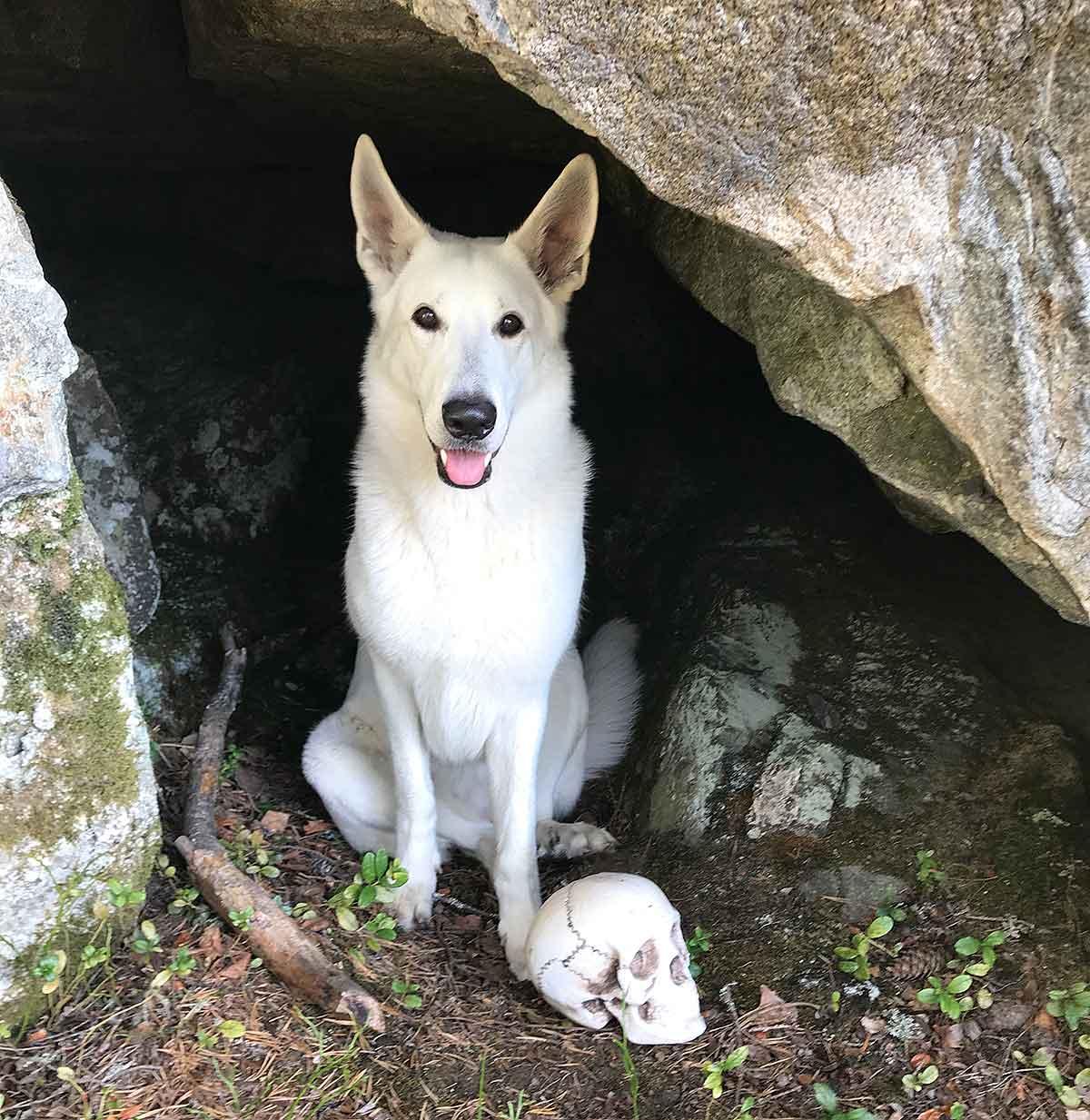 Nova, Vit herdehund, i grottan på Rutberget på geocaching med matte.