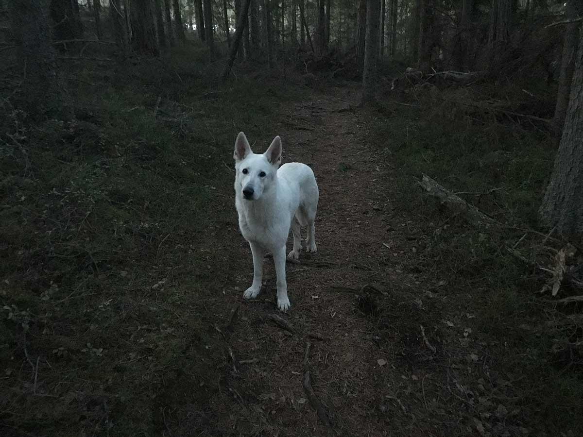 Det blev mörkt i skogen.