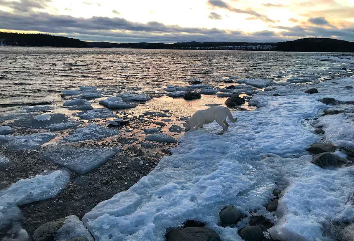 Nova fiskar is längst ut på Storstensudden.