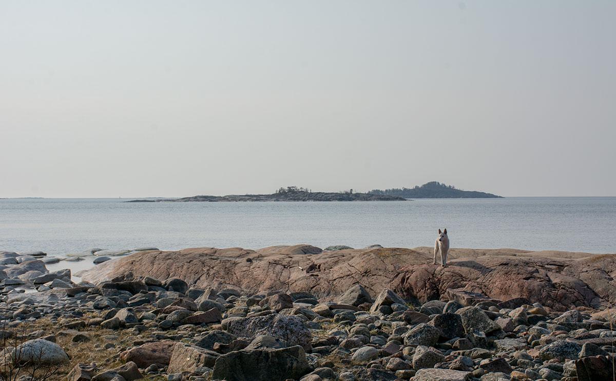 Nova, Vit herdehund, på klipporna på Tennudden