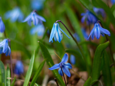 Vårens första växter
