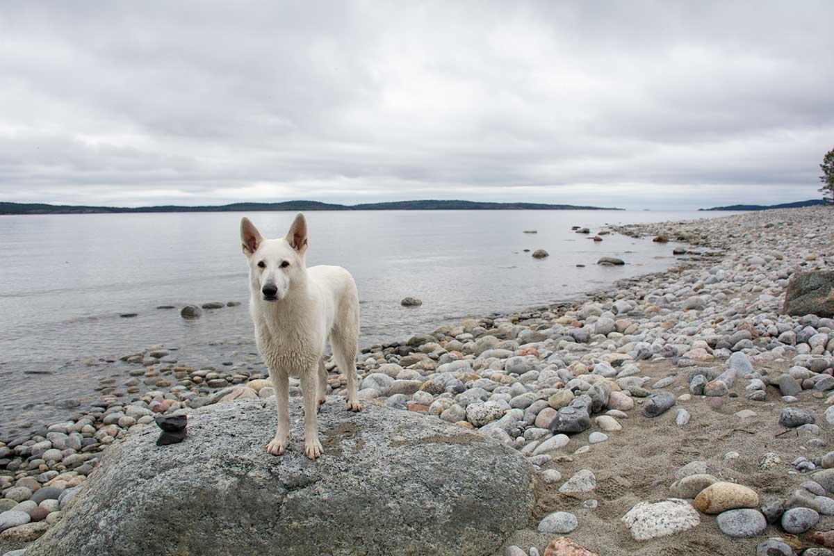 Nova står på en stenbumling på Storstensudden, Domsjö
