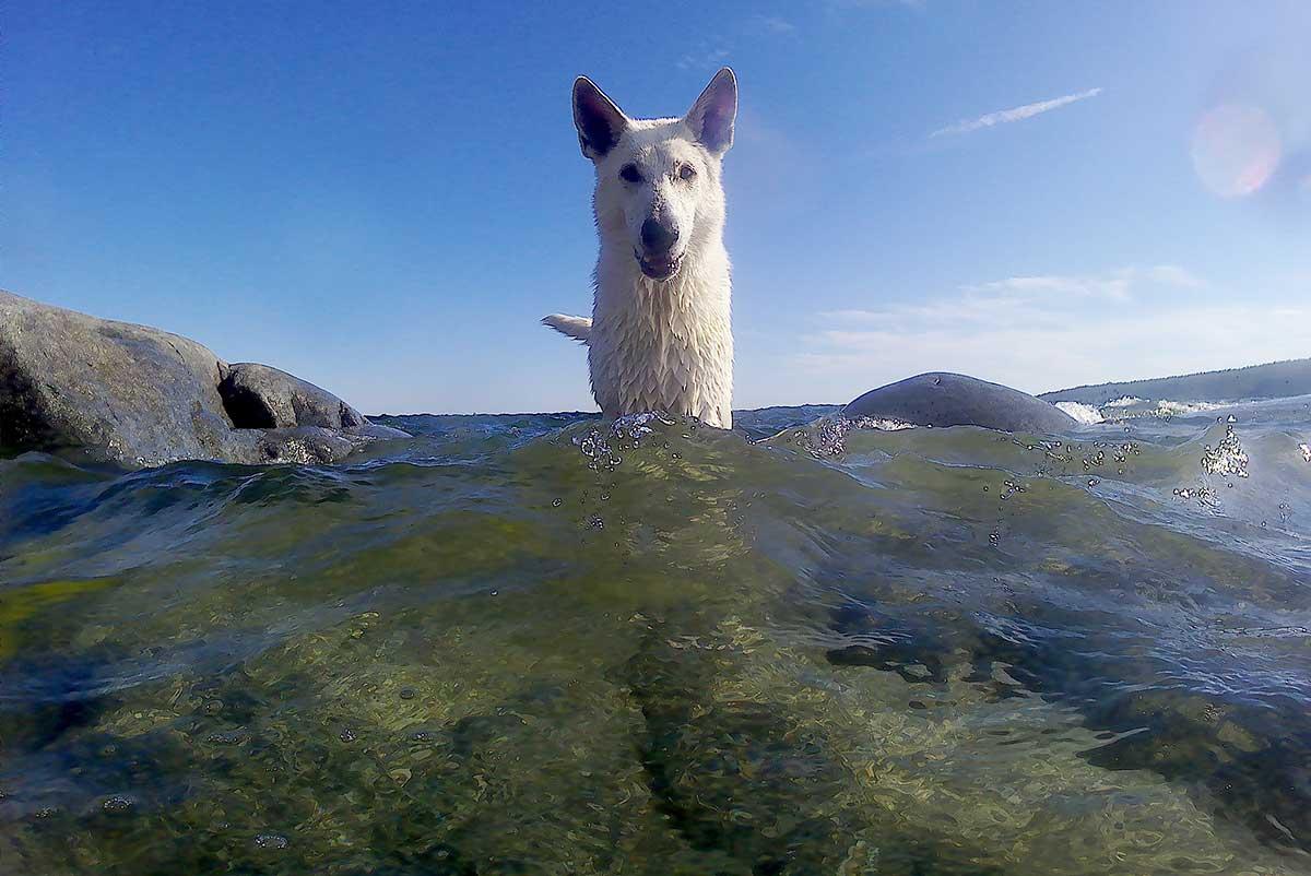 Badar med Nova på Trysunda sommaren 2018
