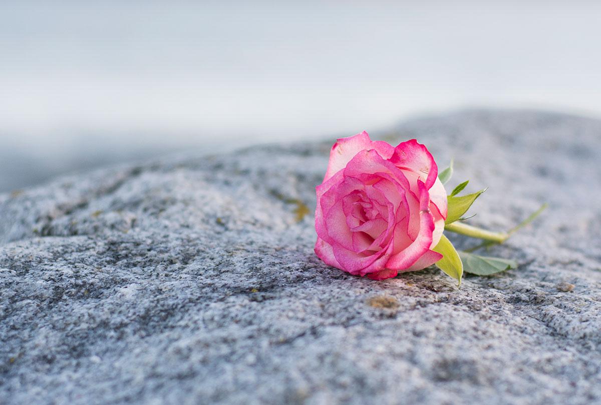 Återseendet vårt hopp